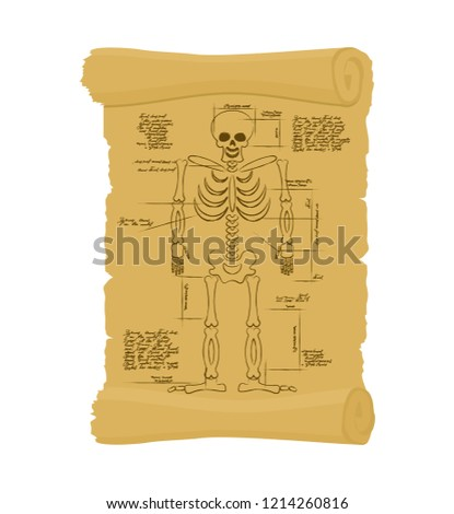 ancient scroll of skeleton archaic papyrus of anatomical struct stock photo © popaukropa
