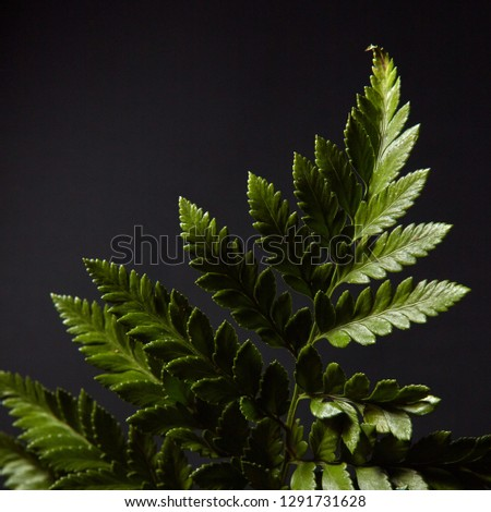 Fresh green fern twig presented on a black background with highlights of light and copy space. Natur Stock photo © artjazz