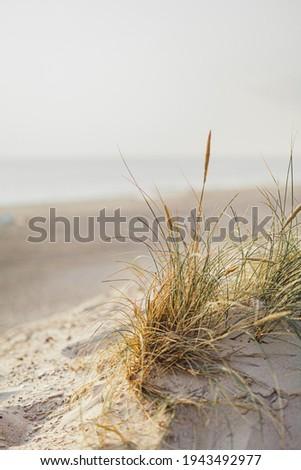 Postcard of Seaside at Baltic Sea, Darss Coast Stock photo © Jul-Ja