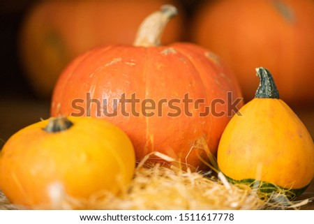 Big orange pumpkin and two smaller yellow ones on pile of straw Stock photo © pressmaster