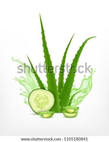 Aloe Vera plants healthy skin protection natural medicine, healthcare Stock photo © lunamarina