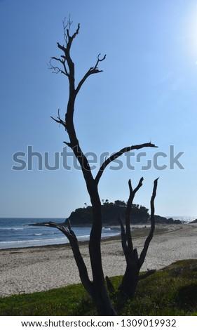 Stockfoto: Weinig · eiland · strand · zegel · rotsen