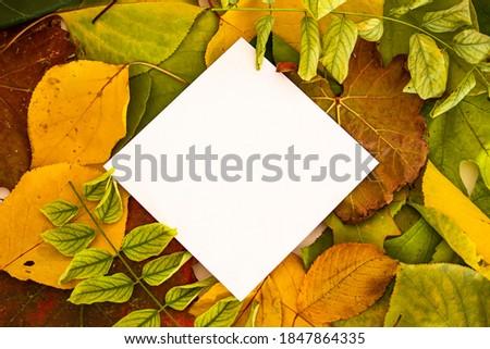 Abstract oranje houten bladeren papier Stockfoto © alevtina