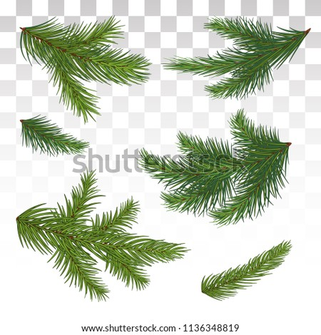 Set green pine branch isolated on white. Lush fluffy fir Christmas tree twig Stock photo © orensila