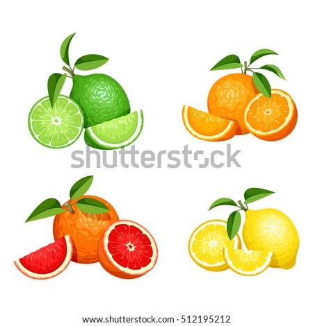 Wektora zestaw cytryny pomarańczowy wapno grejpfrut Zdjęcia stock © kyryloff