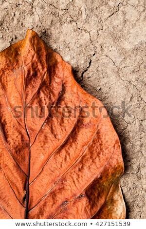 Boom wortels detail bos Stockfoto © boggy