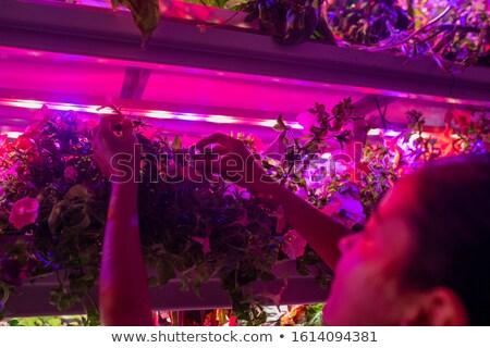Eller genç kadın bahçıvan bakım Stok fotoğraf © pressmaster