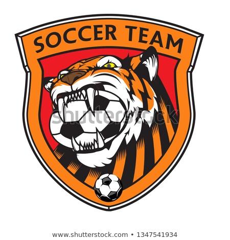 Tigre ballon bouclier mascotte icône illustration Photo stock © patrimonio