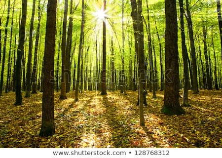 Tájkép fák növények napos idő fa terv Stock fotó © ruslanshramko