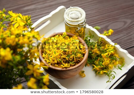 Hypericum plant and extract Stock photo © erierika