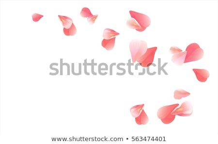 absztrakt · piros · szirmok · elegáns · terv · nagy - stock fotó © ussr