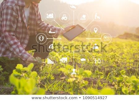 vidéki · díszlet · szélturbina · napos · vidéki · táj · déli - stock fotó © razvanphotography