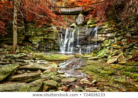 Blackwater Falls in Autumn Stock photo © backyardproductions