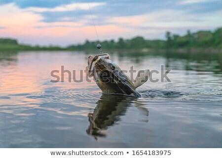verekedés · horgászbot · Franciaország · sport · természet · háttér - stock fotó © stevemc