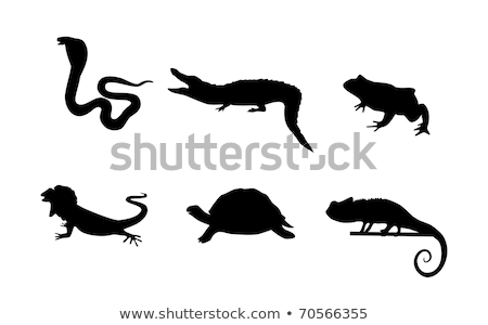 the set of the silhouettes of the reptiles stock photo © perysty
