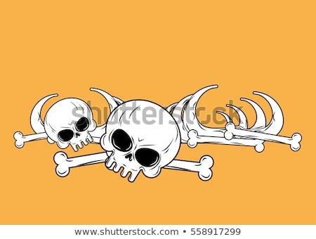 Boglya koponyák fotó köteg mezők háttér Stock fotó © sumners