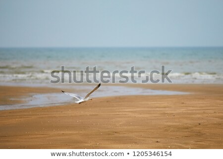 Mouette battant plage nature paysage mer Photo stock © bbbar