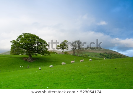 Wales countryside fields and hills, sheep grazing. Stock photo © latent