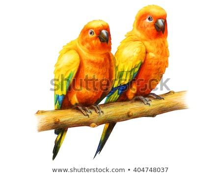 vicces · rajzfilmfigura · papagáj · izolált · fehér · feleség - stock fotó © RAStudio