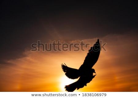 Gaivota pôr do sol céu sol mar azul Foto stock © BSANI