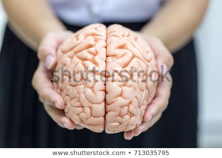 Human brain model on white background Stock photo © shutswis