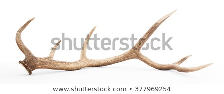Antler on a white background. Stock photo © inxti
