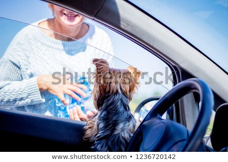 Blond woman returning from shopping trip Stock photo © photography33
