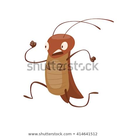 çalışma hamamböceği çalıştırmak yarış Stok fotoğraf © zzve