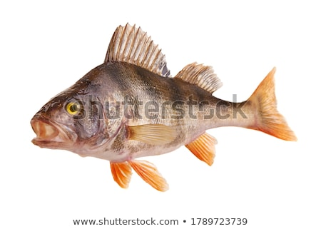 fish predator Stock photo © kovacevic