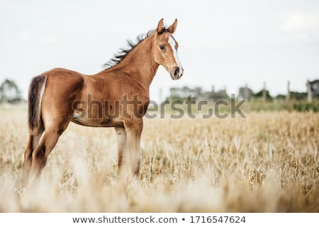 Pasture field Stock photo © jrstock