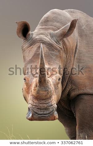 orrszarvú · portré · közelkép · kettő · madár · afrikai - stock fotó © bradleyvdw