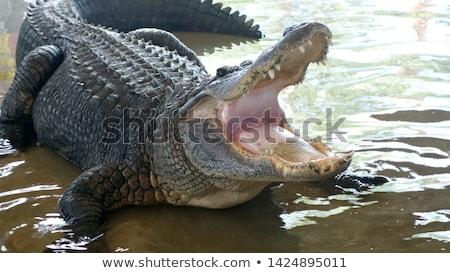 Флорида док животные Весы страшно Сток-фото © ArenaCreative