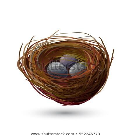 Bird's nest with robin eggs stock photo © Concluserat