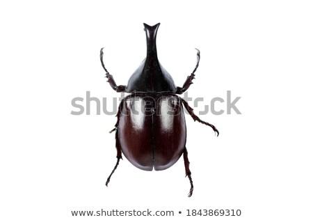 Sitting Beetle Stock photo © derocz