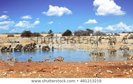 zebra · Namibya · park · Afrika · yüz - stok fotoğraf © dirkr