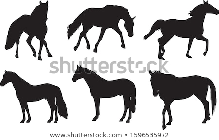 Big collection of horse silhouettes. Vector illustration Stock photo © leonido