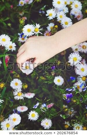 el · papatya · kız · eller - stok fotoğraf © gemenacom