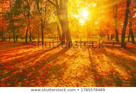 noite · luz · colina · outono · último - foto stock © smileus