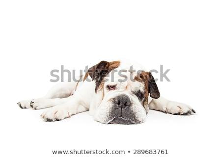 犬 脚 広い 色 ストックフォト © Quasarphoto
