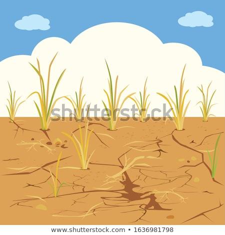 solo · seca · rachaduras · secar · terra · naturalismo - foto stock © smithore