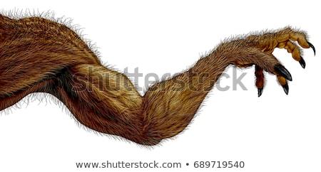 werewolf hand stock photo © lightsource