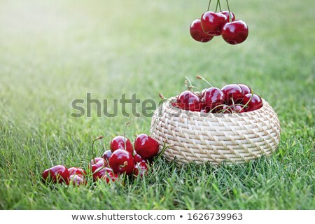 Bucket with cherry standing in the grass Stock photo © Zhukow
