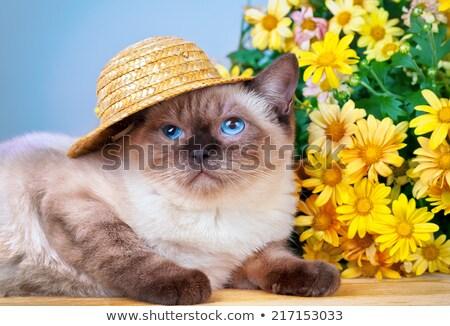 сиамские · кошки · соломенной · шляпе · голову · цветок · птиц · гнезда - Сток-фото © nizhava1956