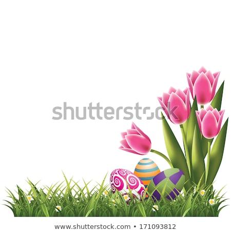 fresh tulips petals and card eps 10 stock photo © beholdereye