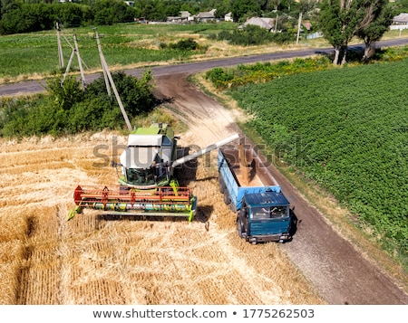 Modern combine harvester unloading green corn into the trucks Stock photo © lightpoet