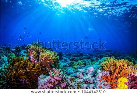 Coral reef under the sea Stock photo © bluering