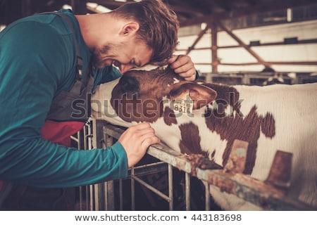 Lácteo agricultor queso ilustración fondo vaca Foto stock © bluering