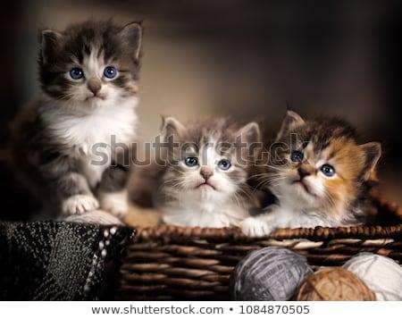 котенка мяча пряжи иллюстрация природы кошки Сток-фото © adrenalina