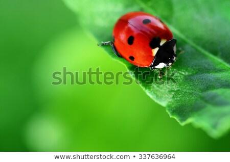 Macro immagine signora bug matita pastello Foto d'archivio © mady70