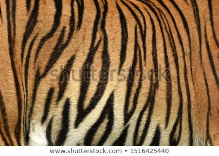Tijger bont mode abstract natuur Stockfoto © zven0
